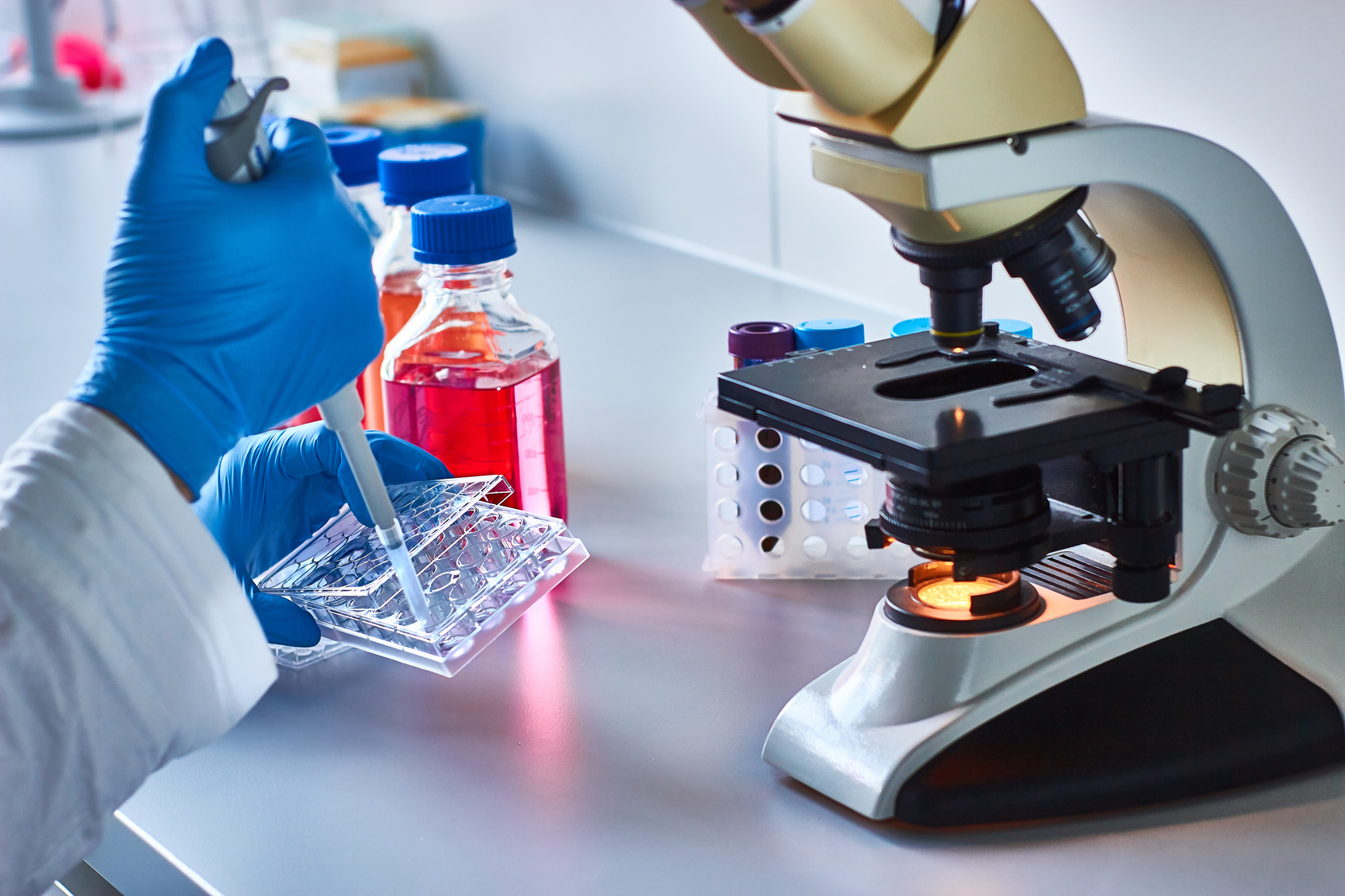 cell culture and microscope