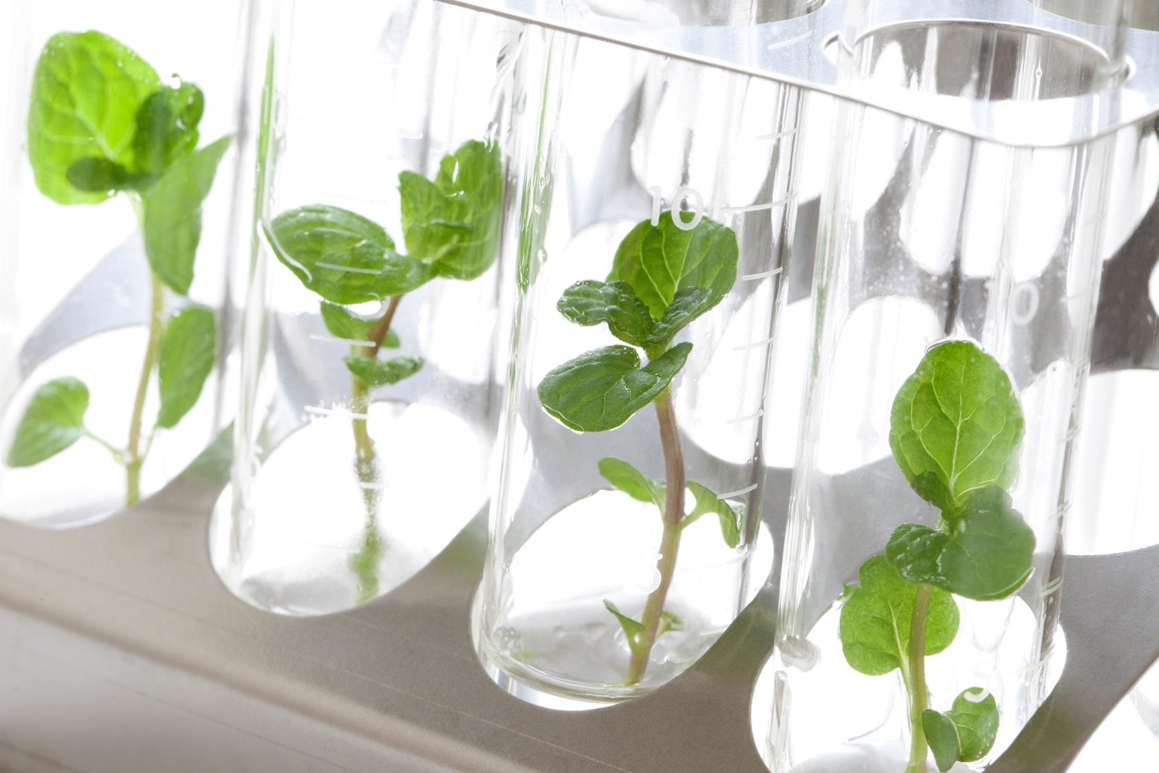 botanical material